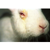ANIMAL RESEARCH: THE GOOD, THE BAD, AND THE ALTERNATIVES