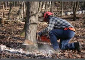 Should We Stop Cutting Down Trees Debate Org