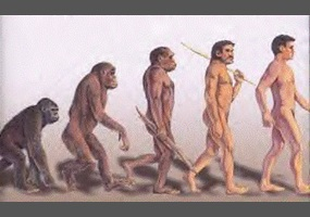 Are humans apes?