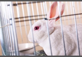 the controversy surrounding cosmetic testing on animals The reason for these deaths and mutations, and the surrounding controversy, is simply because the animals being tested on do not react the same way human beings would, according to health research funding.
