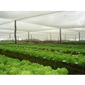 How to Grow Terrestrial Plants
