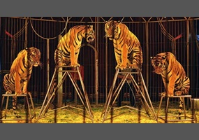 The debate about the plight of circus animals