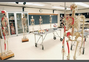 Should high school students be required to take anatomy classes and ...
