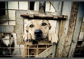 it is cruel to keep animals in cages There is more to treating animals in an appropriate way than keeping them  healthy are we right to use animals as objects of entertainment.