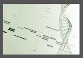 essay genetic engineering