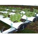 Risks for Terrestrial Plants