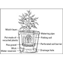 How to Use Self-Watering Planters
