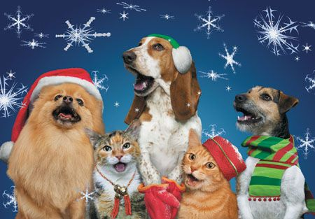 cats and dogs christmas cards box of 10 c72769