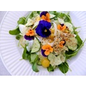 FAQs About Edible Herb Flowers