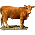 Red Heifer Bible Prophecy