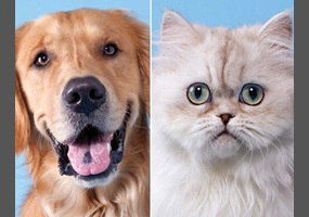 debate opening for dogs are better than cats Grain free cat food is becoming more and more popular among pet parents, but is it a good choice learn here how to choose the best diet for your cat.