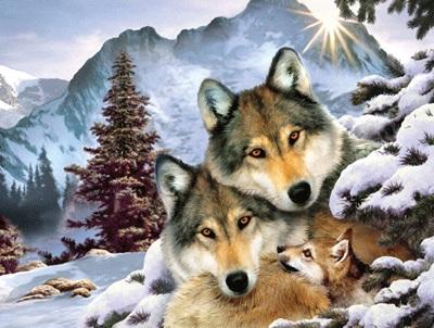 Wolf harmony 500 piece jigsaw puzzle