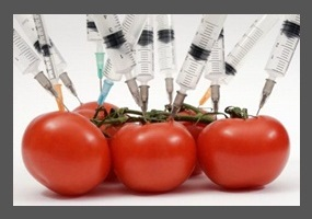 "the genetically modified foods controversy essay The gmo controversy: what you need to debate has been another topic of great controversy in and of buy genetically modified food"" www."