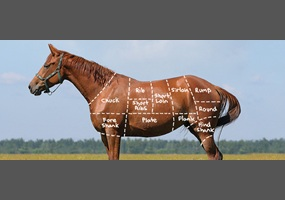 """horse slaughter a debate Horse slaughter proponents basically complain that, without horse slaughter in the united states, owners would not have a """"viable"""" solution to """"dispose of"""" their old, diseased or merely """"unwanted"""" horses, hence creating a rise in abuse and neglect cases it's typical of such ."""