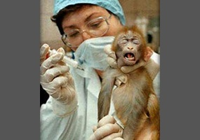 ask the experts should animals be used for medical research should animals be used for medical research