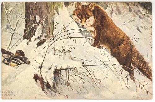 fox and quail 1905 artist