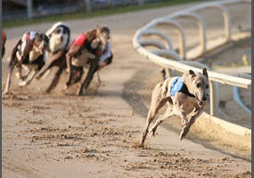 Should dog racing be allowed?