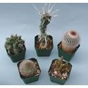 Types of Terrestrial Plants