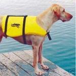 Large Aqua Dog Life Preserver