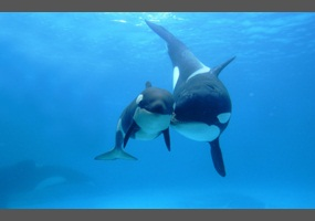 Should marine animals be taken from their natural habitats and put ...