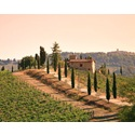 Popular Wineries in the Chianti Region
