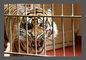 Wild animals in captivity debate