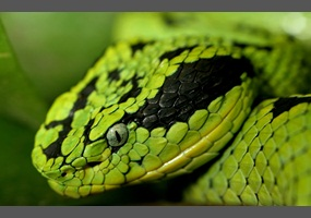 ... to keep exotic pets? i.e. snakes, reptiles, fish etc... Debate.org