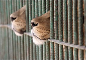 Are zoos fair on the animals that live there.?