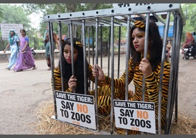 zoos animals prisons Dubai police banned two demonstrators from animal rights group peta from  starting a protest branding zoos as animal prisons on thursday, saying they  were.