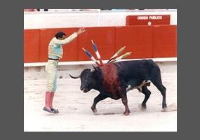 Bullfighting in Spain – Should it Be Banned?