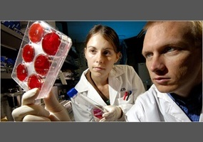 Should stem cell research be legal
