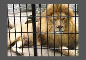 Zoos Are Fun for People but Awful for Animals