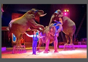 the debate about the plight of circus animals Circus animal cruelty awareness ad campaigns  have touched people in a way that will help them understand the plight of the circus animal and to stop supporting .
